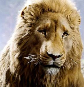 aslan-291x300.jpg